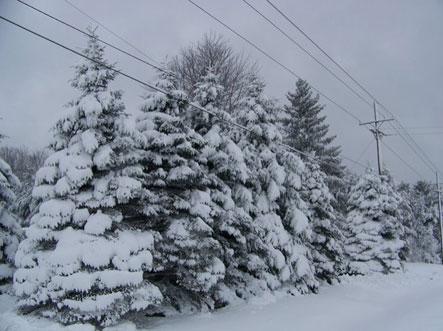 snow030508.jpg
